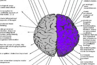 Left Vs Right Brain , 8 Left Right Brain Characteristics In Brain Category