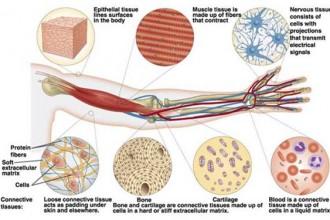Mammalian tissues in Skeleton
