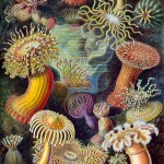 Marine invertebrates , 9 Marine Invertebrates In Invertebrates Category