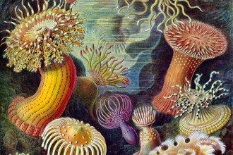Marine invertebrates in Organ