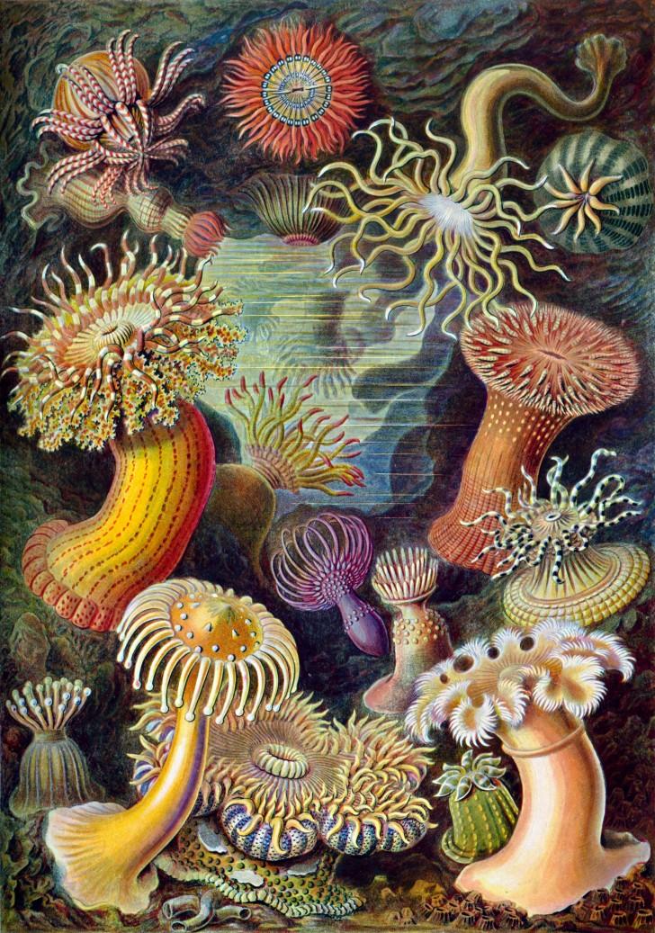 Invertebrates , 9 Marine Invertebrates : Marine Invertebrates