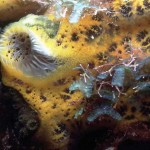 Marine invertebrates picture , 9 Marine Invertebrates In Invertebrates Category