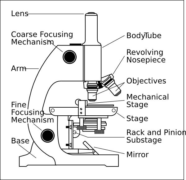 Cell , 5 Labeled Parts Of A Microscope : Microscope With Labels Clip Art