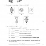 Mitosis Worksheet Answer : Biological Science Picture ...