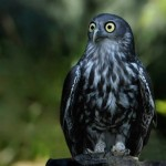 Owl Facts For Kids , 6 Owl Facts For Kids In Birds Category