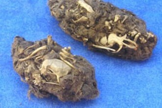 Pellet Lab , 6 Pictures Of Owl Pellet In Birds Category