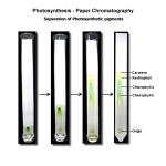 Photosynthesis Chromatography Pigments , 6 Plant Pigment Chromatography In Plants Category
