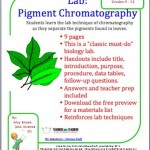 Pigment Chromatography , 6 Leaf Chromatography Pictures In Laboratory Category