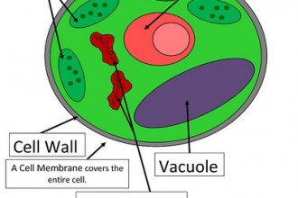 Plant Cell Project Ideas For Kids , 5 Plant Cell Activities For Kids In Cell Category