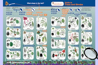 Plant Identification Guides , 3 British Tree Leaf Identification Keys In Plants Category
