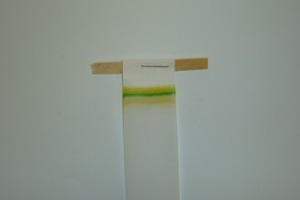 Plant Pigment Chromatography in Cell
