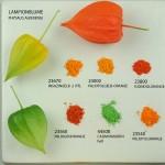 Plant Pigmente , 6 Plant Pigment Chromatography In Plants Category