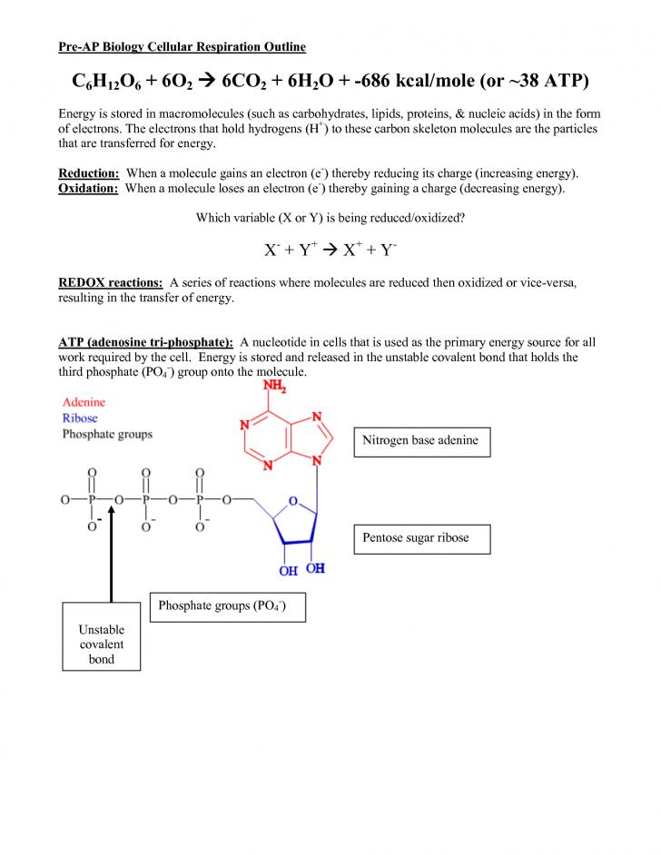 Scientific data , 6 Ap Biology Course Outline : Pre AP Biology Cellular Respiration Outline