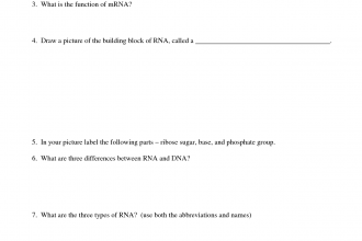 RNA Worksheet Name , 6 Rna Worksheet In Genetics Category