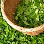The Adoration of Tea , 5 Tea Bag Vs Loose Leaf In Plants Category