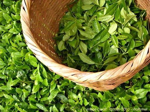 Plants , 5 Tea Bag Vs Loose Leaf : The Adoration Of Tea