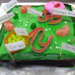 The Plant Cell , 5 Edible Plant Cell Project Ideas In Cell Category