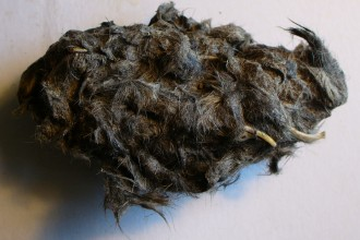 The Owl Pellet , 6 Pictures Of Owl Pellet In Birds Category