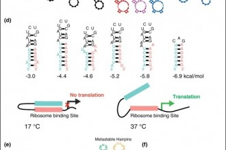 Theory And Practice In RNA Secondary Structure , 7 Rna Quiz In Cell Category