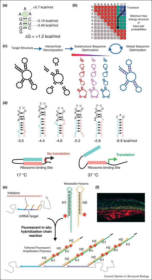 Cell , 7 Rna Quiz : Theory And Practice In RNA Secondary Structure
