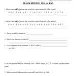 Transcription Worksheet , 6 Rna Worksheet In Genetics Category