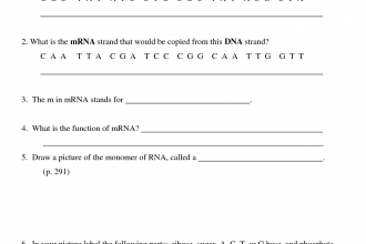 Worksheets Dna And Rna Worksheet Answers structure of dna and rna worksheet 6 biological transcription in genetics category
