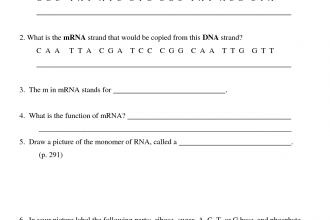 Transcription Worksheet in Environment