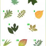 Tree Identification , 4 Oak Tree Leaf Identification Key In Plants Category