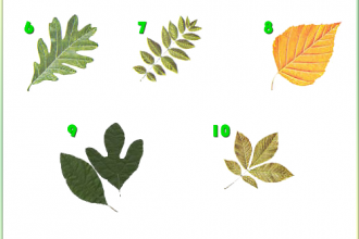 Tree Identification in Plants