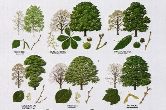 Tree Leaf Names , 3 British Tree Leaf Identification Keys In Plants Category
