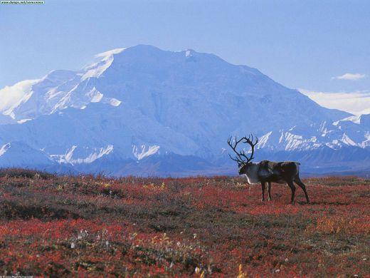Biome , 6 Tundra Biome Facts : Tundra Biome Image