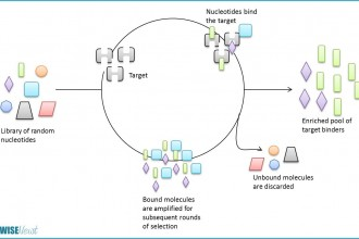 Using RNA To Deliver Therapeutics , 7 Rna Quiz In Cell Category