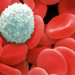 White Blood Cells Function , 8 White Blood Cells Pictures In Cell Category