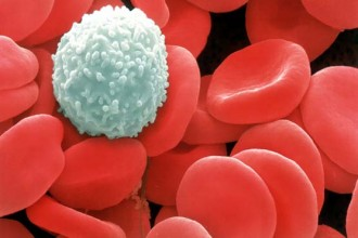 White Blood Cells Function in Skeleton