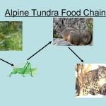 alpine Tundra , 6 Tundra Biome Facts In Biome Category