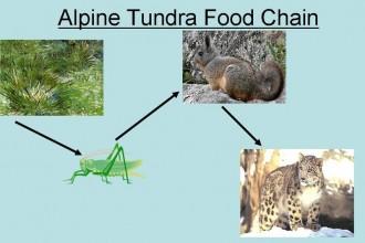 alpine Tundra in Environment