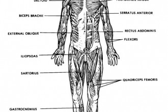 Anatomy And Physiology Course , 8 Physiology Class In Organ Category