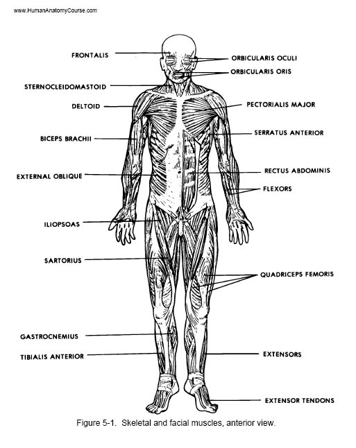 Anatomy And Physiology Course : 8 Physiology Class | Biological ...