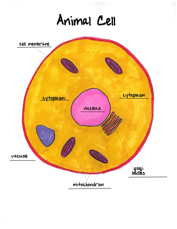 Animal cell labeled worksheet 6 animal cell labeled biological cell 6 animal cell labeled animal cell labeled worksheet ccuart Image collections