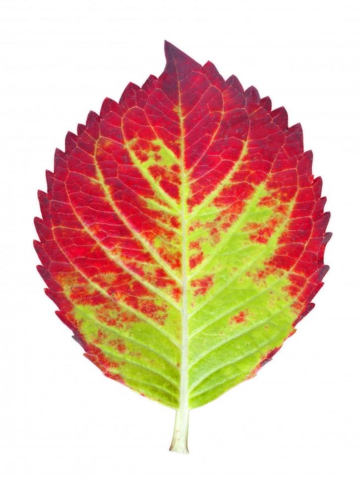 Scientific data , 6 Leaf Pigment Chromatography : Autumn Leaf