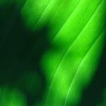 banana leaf san diego reviews , 6 Banana Leaf San Diego In Plants Category