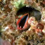 barnacle , 9 Marine Invertebrates In Invertebrates Category