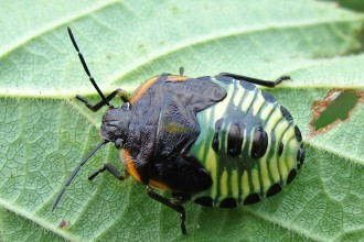 beetle type bugs uk in Birds