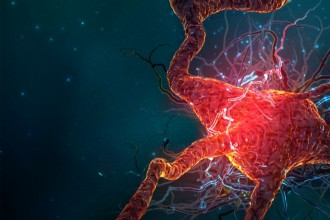 Brain Artwork Cells Wallpaper , 6 Brain Wallpaper Pictures In Brain Category