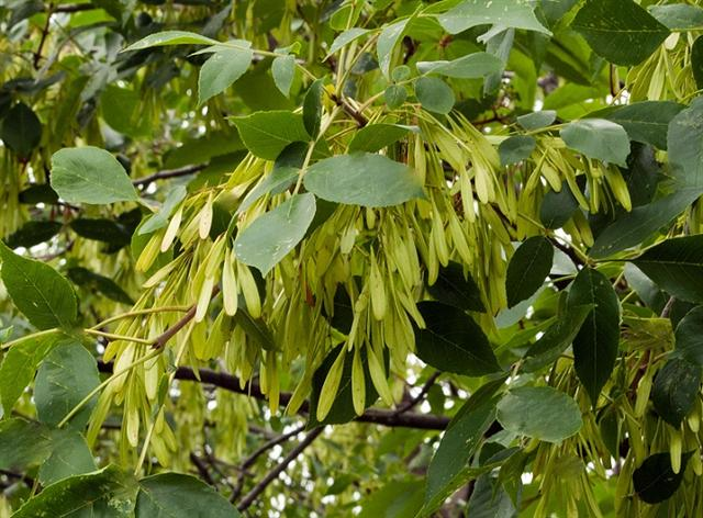 Plants , 6 British Tree Photos : British Tree Names