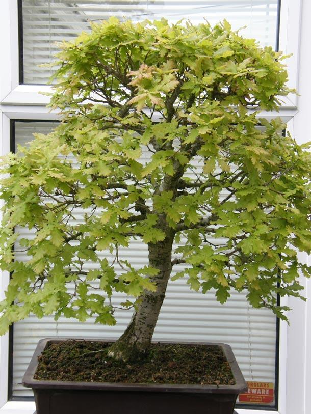 Plants , 6 British Tree Photos : British Tree Species