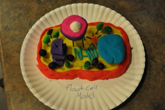 Cell Model Projects , 6 3d Cell Models For School Project In Cell Category