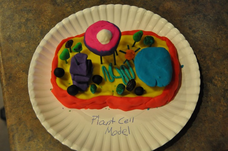 Cell , 6 3d Cell Models For School Project : Cell Model Projects