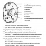 cell organelle quiz , 6 Test On Cell Structure And Function In Cell Category