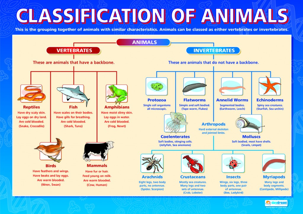 classification of animals diagram
